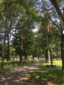 Siena Summer 2018